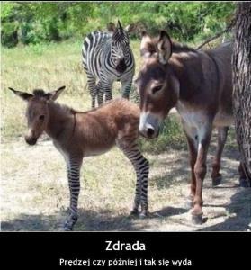 http://www.zdradzeni.info/images/photoalbum/album_9/dolad3_t2.jpg